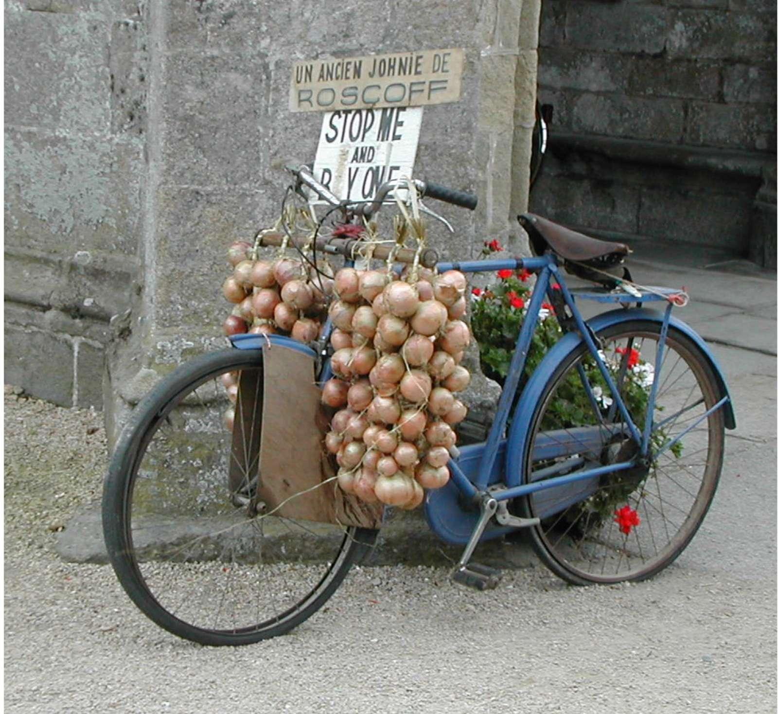 pink onion bike