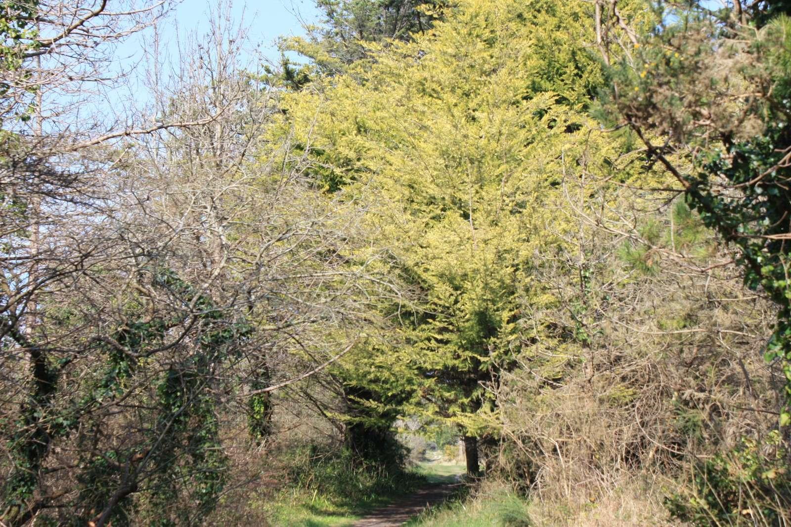 Santec forest